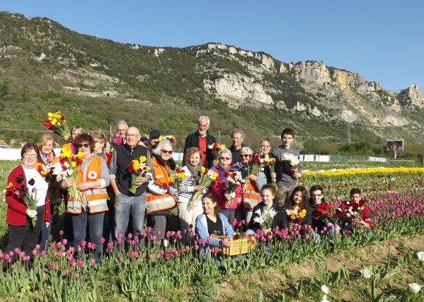 Cueillette tulipes 2018 2